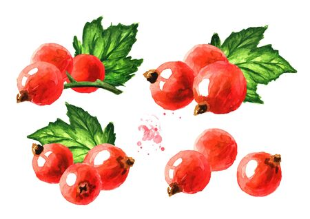 Red currant set. Hand drawn watercolor illustration isolated on white background