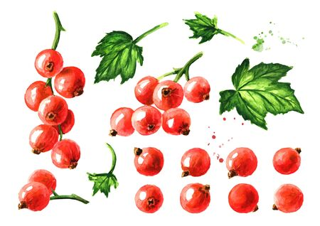 Red currant set. Hand drawn watercolor illustration, isolated on white background