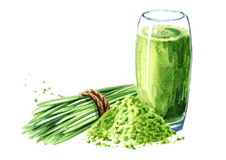 Wheatgrass juice for health, green smoothies with wheat grass plant and powder. Watercolor hand drawn illustration isolated on white background