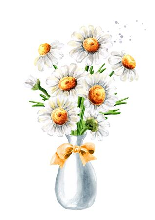 Bouquet of Chamomile flowers in the vase. Hand drawn watercolor illustration isolated on white background Banque d'images