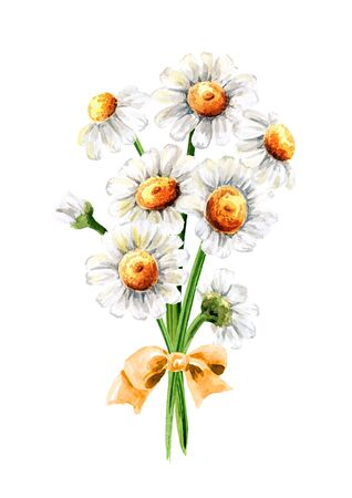 Bouquet of Chamomile flowers. Hand drawn watercolor illustration isolated on white background