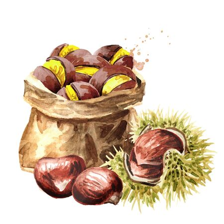 Edible Fresh and Roasted Chestnuts. Hand drawn watercolor illustration isolated on white background