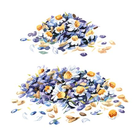 Calming herbal collection.  Lavender with chamomiles. Hand drawn watercolor illustration isolated on white background