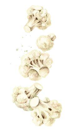 Falling fresh cauliflower blocks. Hand drawn watercolor illustration isolated on white background Banco de Imagens