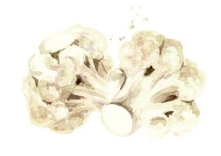 Fresh cauliflower blocks, Hand drawn watercolor illustration isolated on white background