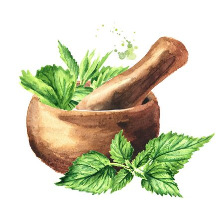 Mortar and fresh young green nettle herb. Hand drawn watercolor illustration, isolated on white background Banco de Imagens