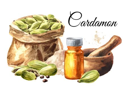 Cardamon pods, powder and bottle of essential oil card, Hand drawn watercolor illustration isolated on white background