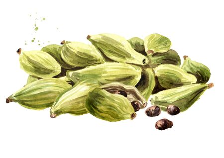 Heap of Cardamon pods and seeds. Super food and indian aroma spice. Hand drawn watercolor illustration isolated on white background