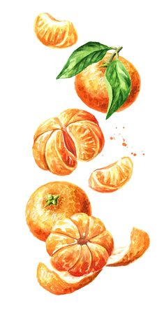 Juicy fresh Mandarine with leaves, tangerine falling in the air. Hand drawn watercolor illustration isolated on white background