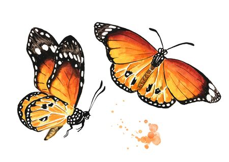 Flying summer butterflies set. Hand drawn watercolor illustration isolated on white background Zdjęcie Seryjne