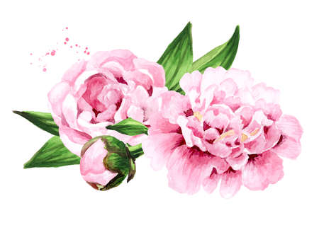 Pink peony Flowers. Hand drawn watercolor illustration isolated on white background 版權商用圖片