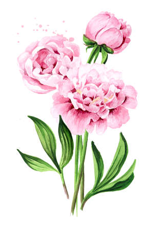 Pink peony Flowers bouquet, Hand drawn watercolor illustration isolated on white background 版權商用圖片
