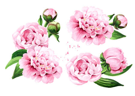 Pink peony Flowers set, Hand drawn watercolor illustration, isolated on white background 版權商用圖片