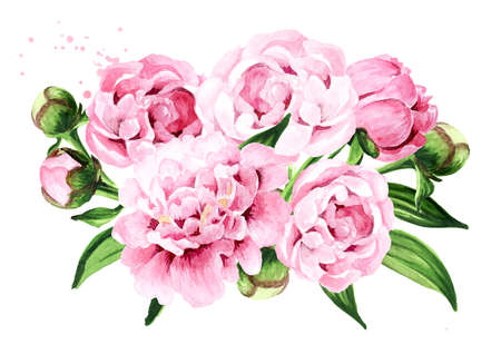 Pink peony Flowers bouquet. Hand drawn watercolor illustration, isolated on white background 版權商用圖片