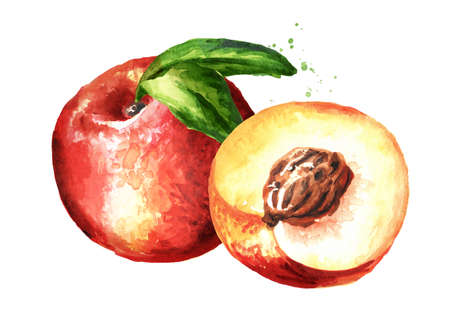 Ripe fresh Nectarine peaches with leaves. Hand drawn watercolor illustration, isolated on white background Standard-Bild