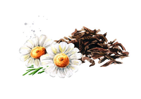 Heap of dry tea leaves and Chamomile. Hand drawn watercolor illustration isolated on white background Standard-Bild