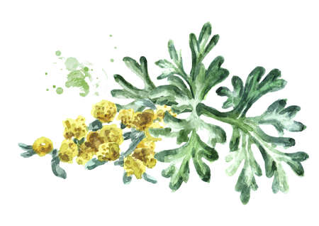 Sprigs, leaf anf flowers of medicinal plant wormwood. Hand drawn watercolor illustration isolated on white background