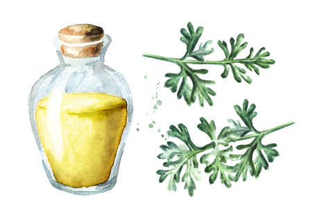 Sprig of medicinal plant wormwood and essential oil set, Hand drawn watercolor illustration isolated on white background Stock fotó
