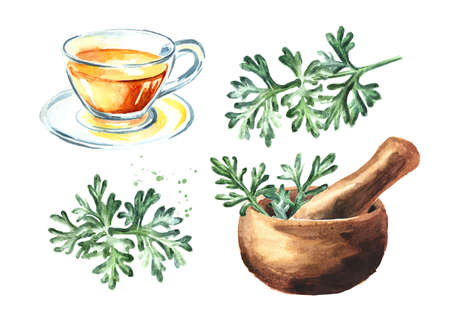 Mortar, tea cup and medicinal plant wormwood, Hand drawn watercolor illustration isolated on white background