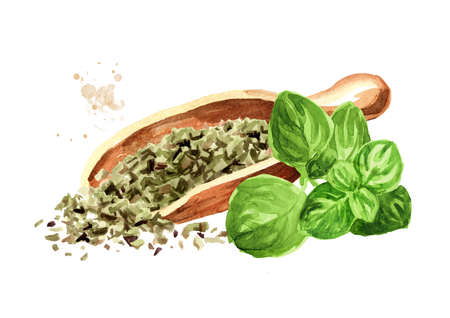 Dried oregano herbs in the wooden spoon, with fresh marjoram twigs. Hand drawn watercolor illustration isolated on white background