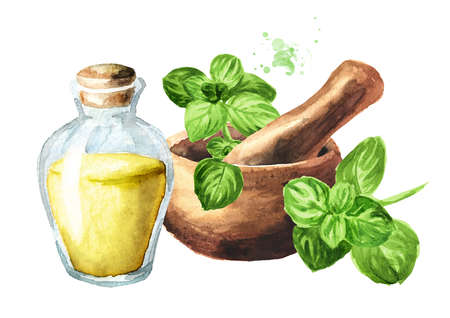 Fresh oregano twig, mortar and bottle of essential oil. Hand drawn watercolor illustration isolated on white background