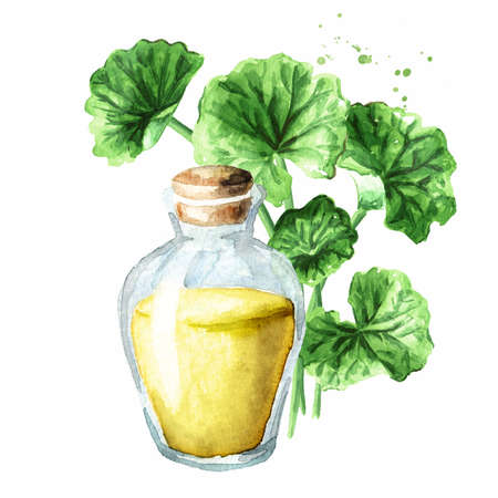 Gotu kola extract, centella asiatica, herbal medicine against cancer, Watercolor hand drawn illustration, isolated on white background