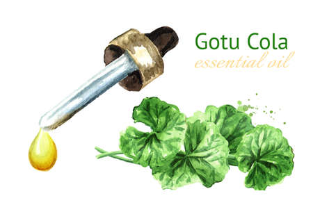 Gotu kola oil, centella asiatica, herbal medicine. Watercolor hand drawn illustration, isolated on white background