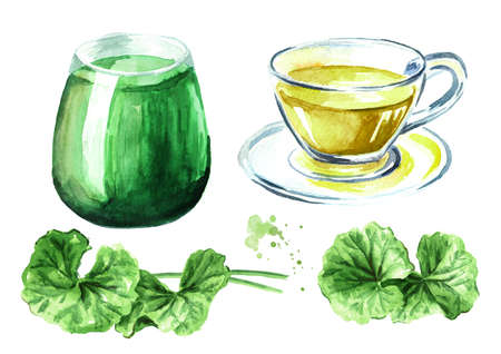 Gotu kola beverage, leaves, tea and juice set, centella asiatica, herbal medicine. Watercolor hand drawn illustration, isolated on white background