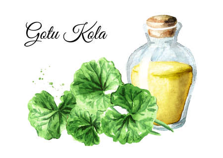 Gotu kola extract, centella asiatica, herbal medicine against cancer. Watercolor hand drawn illustration, isolated on white background