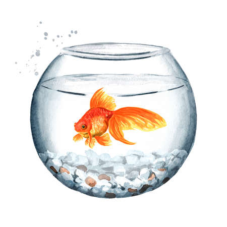 Goldfish swimming in a round glass bowl. Watercolor hand drawn illustration isolated on white background