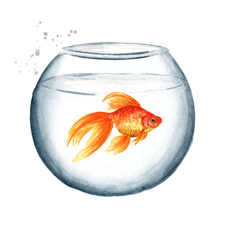 Goldfish swimming in a round glass aquarium. Watercolor hand drawn illustration, isolated on white background