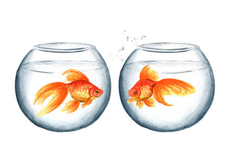 Two glass round aquarium with goldfish. Watercolor hand drawn illustration isolated on white background
