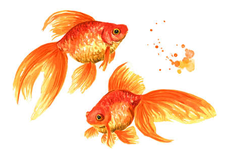 Goldfish. Two gold fishes. Watercolor hand drawn illustration isolated on white background Zdjęcie Seryjne