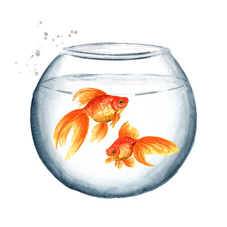 Goldfish. Two gold fishes swimming in a round glass aquarium. Watercolor hand drawn illustration isolated on white background