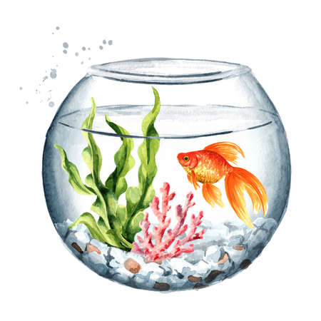 Goldfish swimming in a well-maintained aquarium with algae and corals. Watercolor hand drawn illustration isolated on white background
