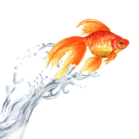 Goldfish. Gold fish jumping out of the water. Watercolor hand drawn illustration isolated on white background