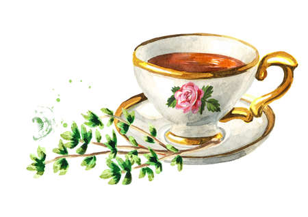 Cup of tea with Thyme. Hand drawn watercolor illustration isolated on white background
