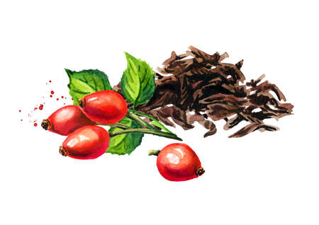 Heap of dry tea leaves and Rosehip. Hand drawn watercolor illustration isolated on white background Reklamní fotografie