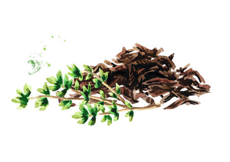 Heap of dry tea leaves and Thyme. Hand drawn watercolor illustration isolated on white background Reklamní fotografie