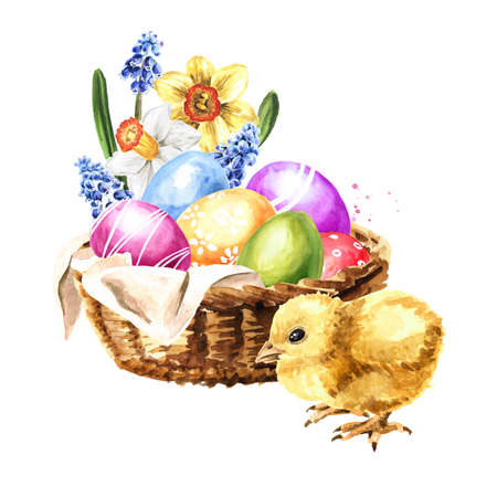 Basket with spring flowers, colored Easter eggs and little yellow chicken. Hand drawn watercolor illustration, isolated on white background