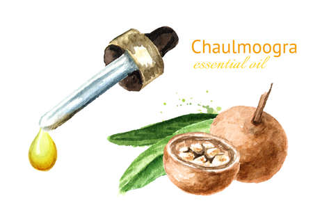 Medical Fruit Hydnocarpus anthelminthicus or Chaulmoogra and bottle of essential drop. Watercolor hand drawn illustration isolated on white background