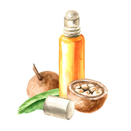Medical Fruit Hydnocarpus anthelminthicus or Chaulmoogra and bottle of essential oil, Watercolor hand drawn illustration, isolated on white background