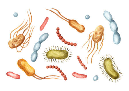 Beneficial prebiotic bacteria set. Watercolor hand drawn illustration, isolated on white background