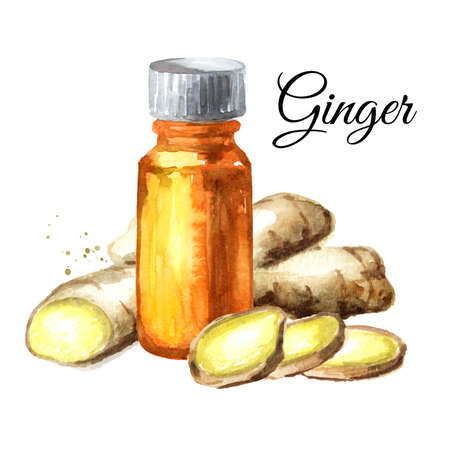 Ginger root and essential oil, Watercolor hand drawn illustration isolated on white background Banque d'images