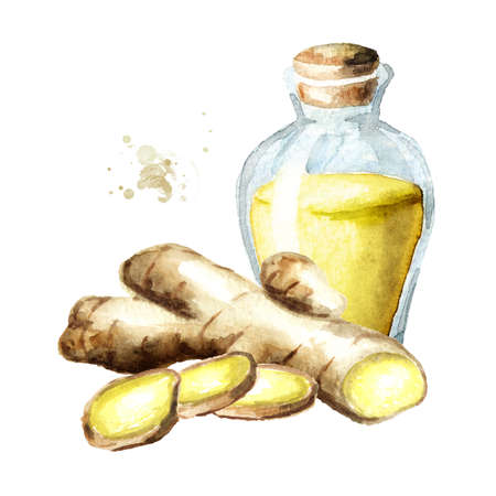 Ginger and essential oil. Watercolor hand drawn illustration isolated on white background Banque d'images