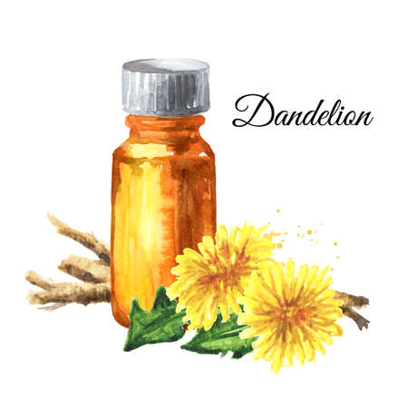 Wild medical plant dandelion oil root extract in a small bottle with fresh leaves and flowers, Watercolor hand drawn illustration isolated on white background
