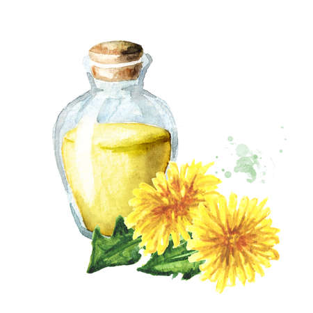 Wild medical plant dandelion oil extract in a small bottle with fresh leaves and flowers, Watercolor hand drawn illustration isolated on white background