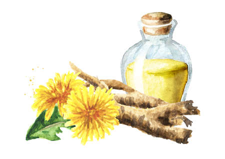 Wild medical plant dandelion oil root extract in a small bottle with fresh leaves and flowers, Watercolor hand drawn illustration, isolated on white background