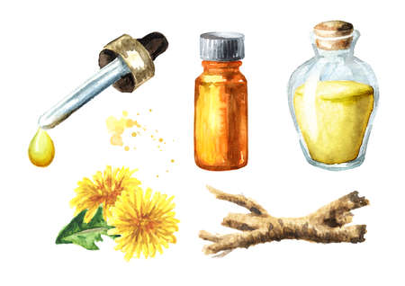 Wild medical plant dandelion oil root extract and fresh leaves and flowers set, Watercolor hand drawn illustration isolated on white background
