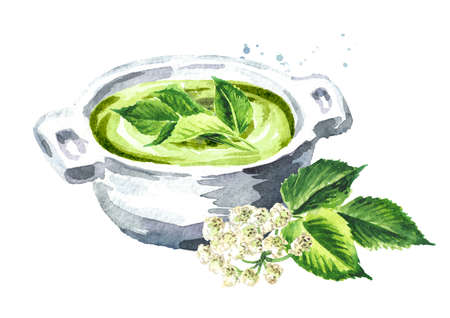 Green Aegopodium podagraria or ground elder vegetarian cream soup, Watercolor hand drawn illustration, isolated on white background Banque d'images